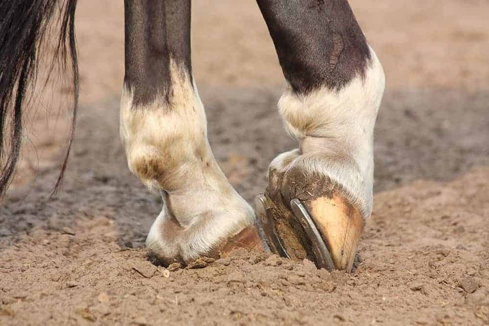 Vet Essentials: All about laminitis | Horse & Country TV